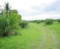 Land for sale 50 rai of land. Nakhon Si Thammarat