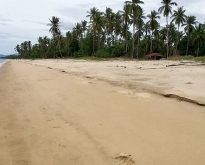 Land for sale on the beach in Nakhon Si Thammarat